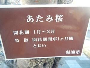 atamizakura011